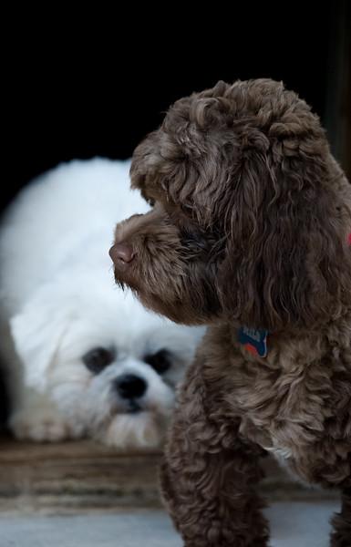 Milo & Callie
