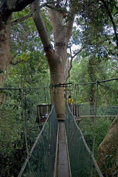 The main platform at Canopy Walkway at Kinabalu National Park, Sabah, Malaysia