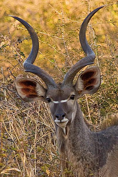 Kudu_edited-1.jpg