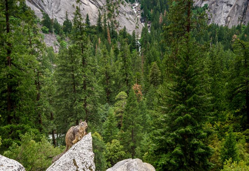 Yosemite -110616-122.jpg