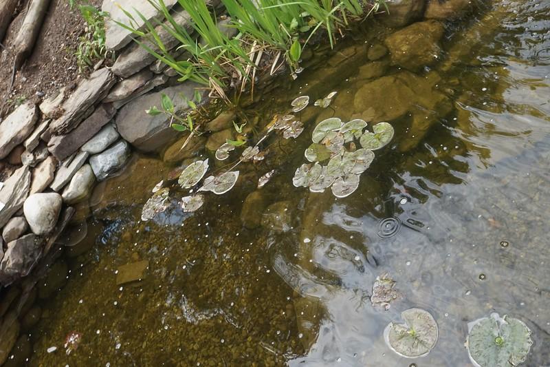 Reeves-Reed Arboretum 30.jpg