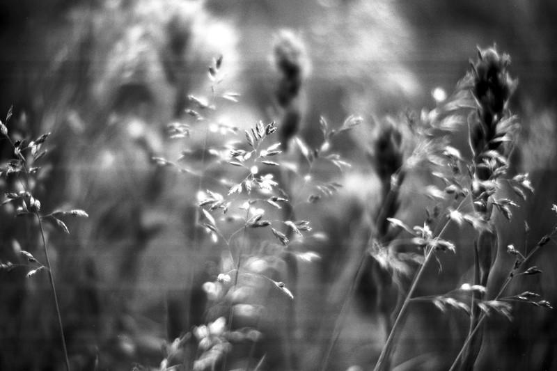 amh FLOWERS (1098).jpg