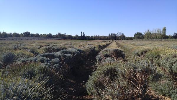 Sierra-Oro Farm Trail