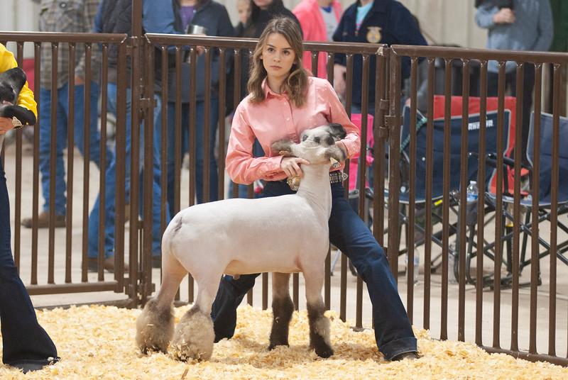 kay_county_showdown_sheep_20191207-27.jpg