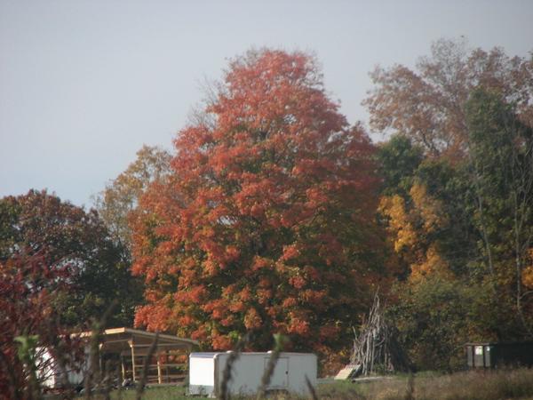 Fall pics 2008 042.jpg