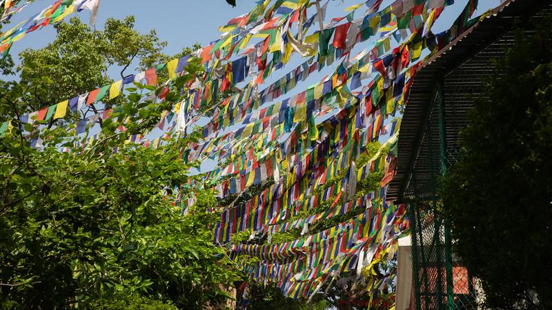 190407-095039-Nepal India-5780.jpg