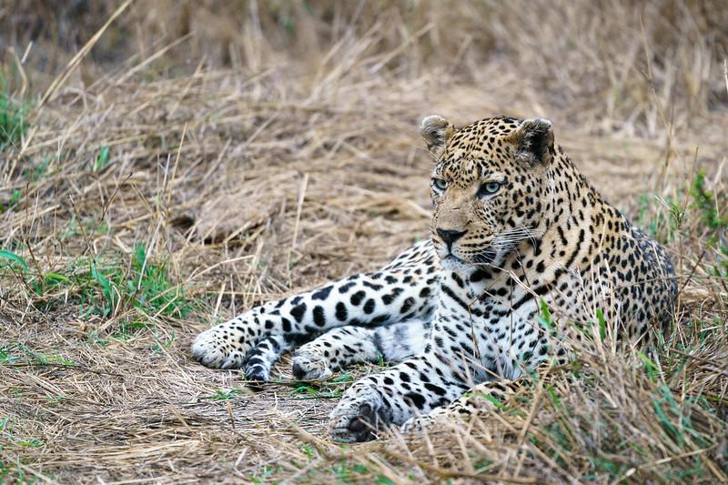 LeopardHills-20171021-0111.jpg