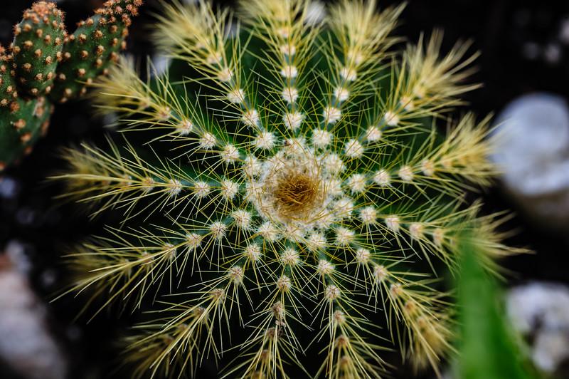 Cactus-7986.jpg