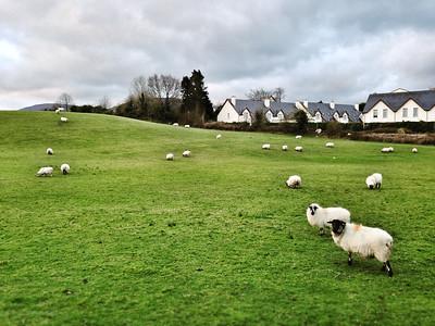 2014-03-31 Ireland - Kenmare