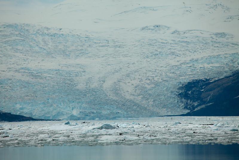 Alaska Icy Bay-4094.jpg