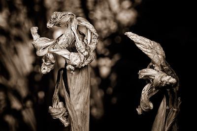Macro Nature - Sepia