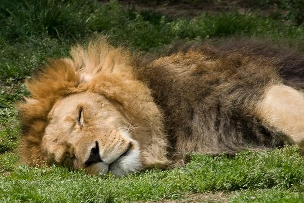 Memphis Zoo 2009