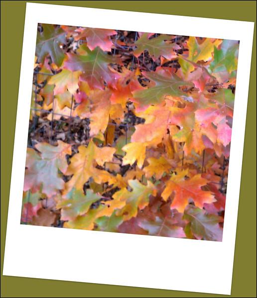 fall (13).jpg