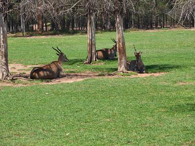 20140113-14 Western Plains Zoo