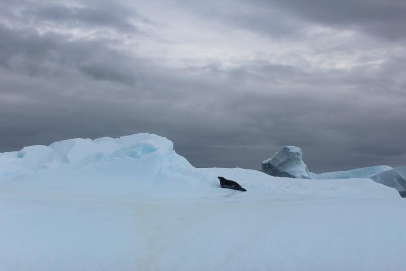Antarctica 265.JPG