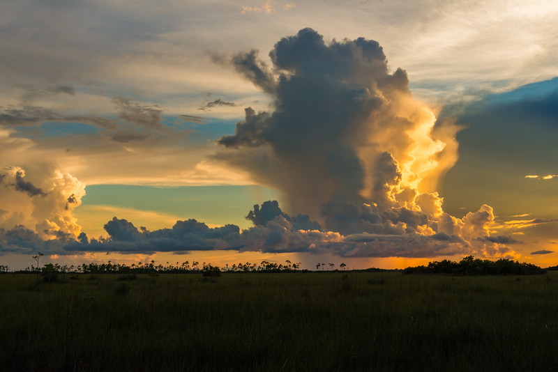 Everglades (12 of 37).jpg