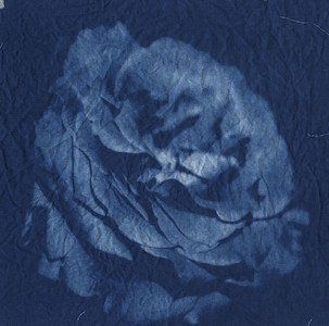 Cyanotype: Digital negative and cyanotype