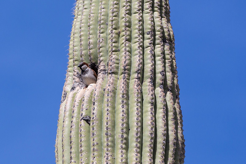 Home Sweet Cactus.jpg