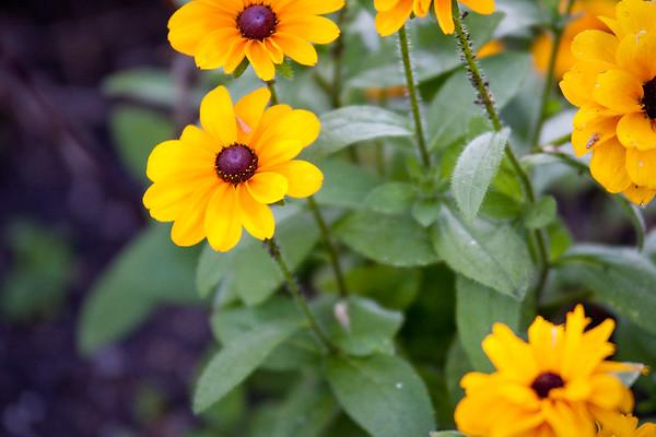 Faith's Garden 2009