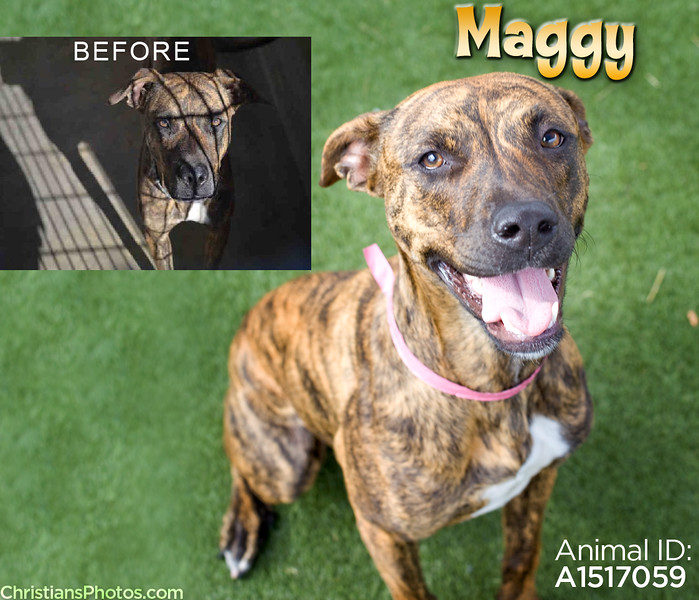 Maggy's intake photo wasn't doing her justice, so I gave her a new one!  She was rescued from South LA Shelter by Best Friends Animal Society soon after her new photo was shared, and then ADOPTED!  One of the sweetest shelter pups I've ever met:)