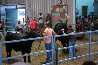 2009 Wash. Co Born & Raised 4-H Cattle Show