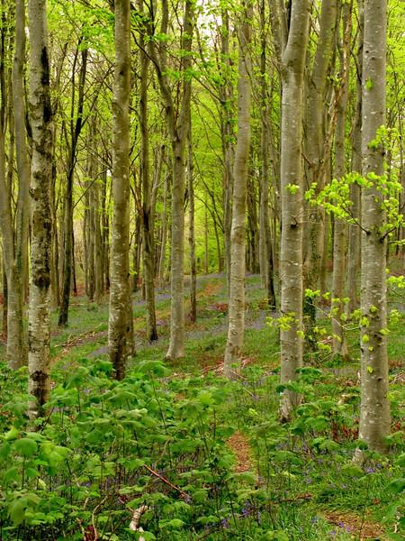 Cann Woods,1.jpg