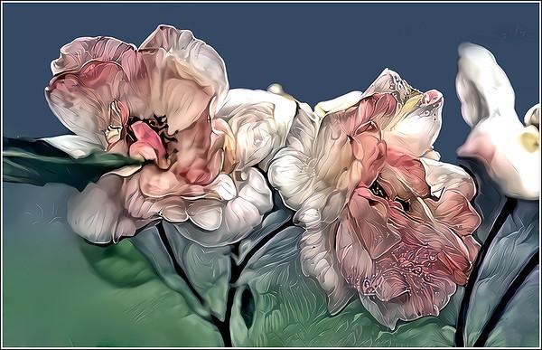 Roses Pink Fantasy