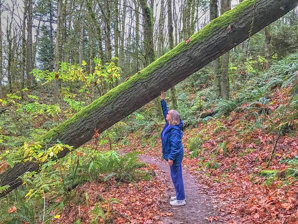 2016-11-13 Wildwood trail - iPhone 7