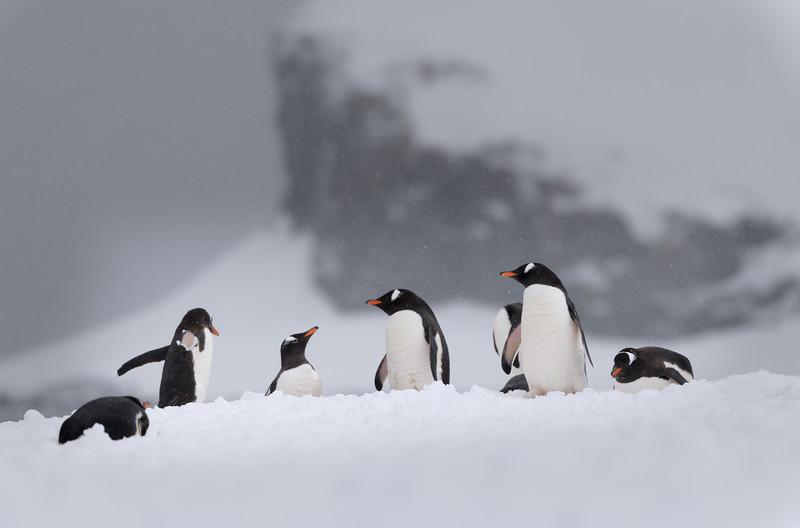 Antarctica-20978.jpg