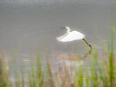 Lower Sanctuary Pond