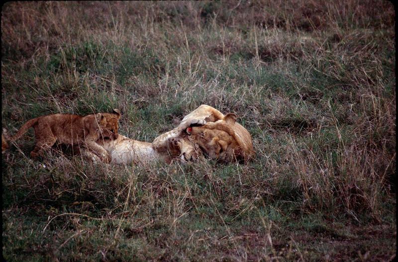 Kenya2_061.jpg