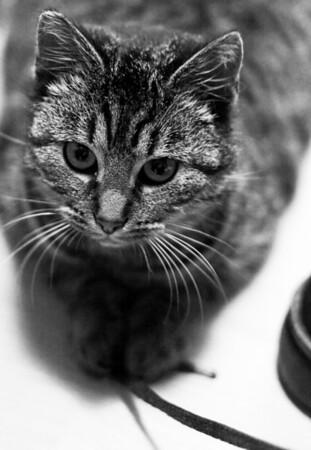 Mori, the new cat