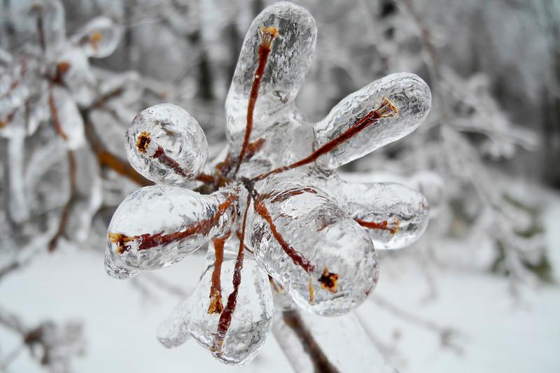 IceStorm-118.jpg