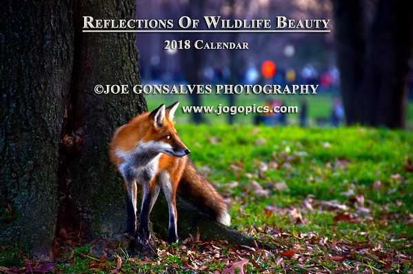 Reflections Of Wildlife Beauty In A 2018 Calendar - Volume 4