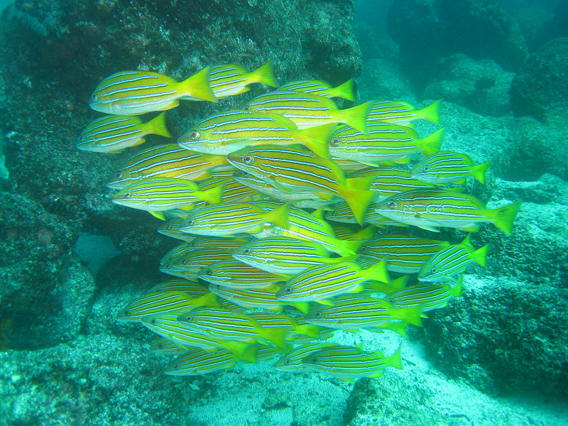 Diving in the Galapagos (155 of 392)