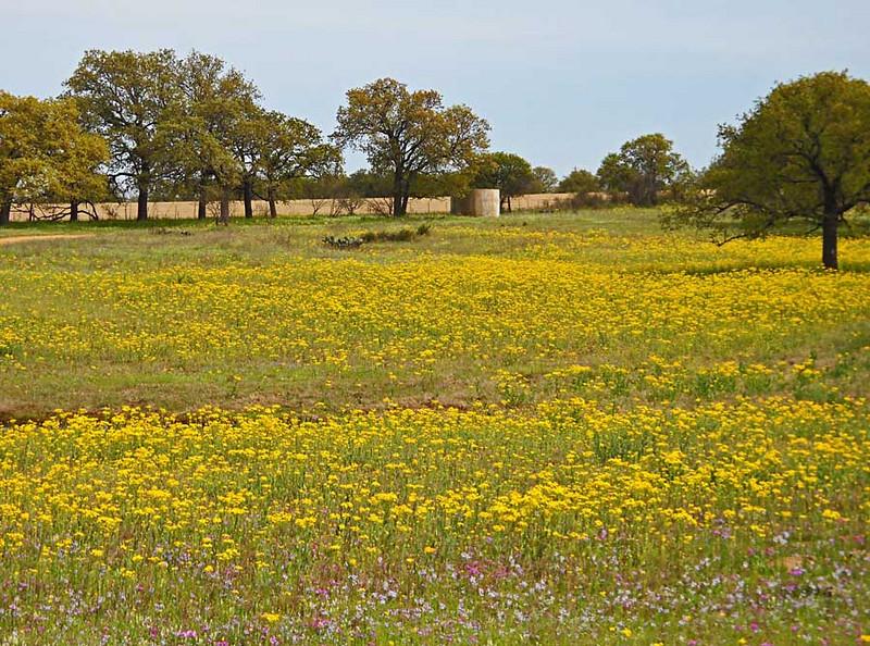 Wildflowers-4-10-edited-223.jpg
