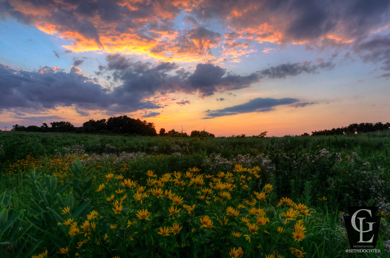 chesnut grove - sunset wildflowers and windmills (p).jpg