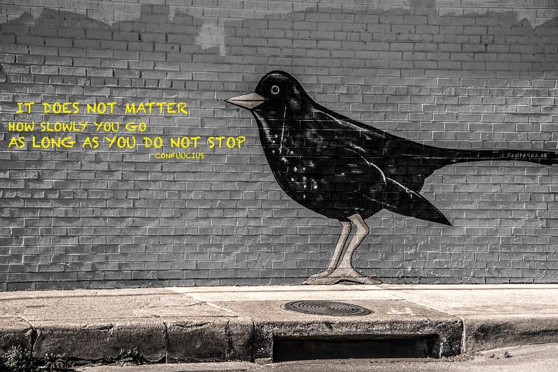black bird 020120-2.jpg