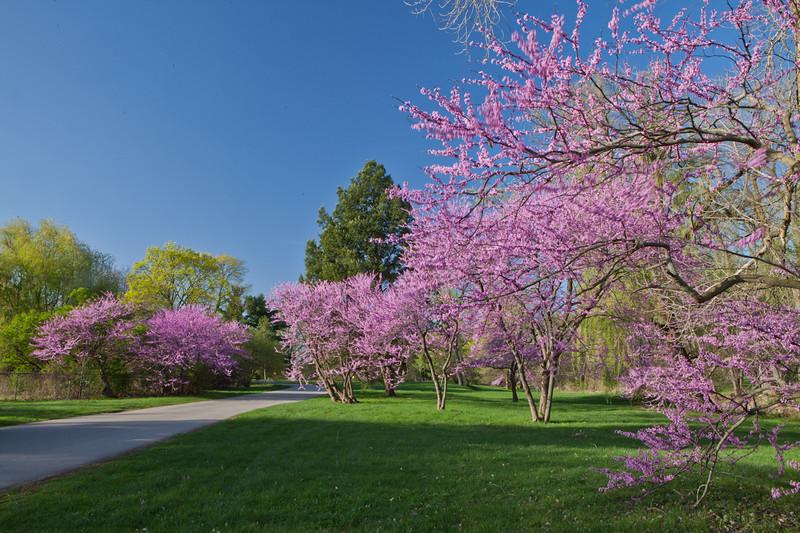 Spring12-1558.jpg
