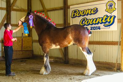 Senior.Reserve Clyde Stallion
