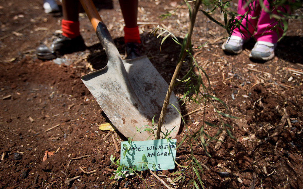 . Children plant a tree in memory of Westgate victim Wilkister Vizengwa Angoro, at a memorial service and tree-planting marking the one-month anniversary of the the Sept. 21 Westgate Mall terrorist attack, in Karura Forest in Nairobi, Kenya Monday, Oct. 21, 2013. (AP Photo/Ben Curtis)