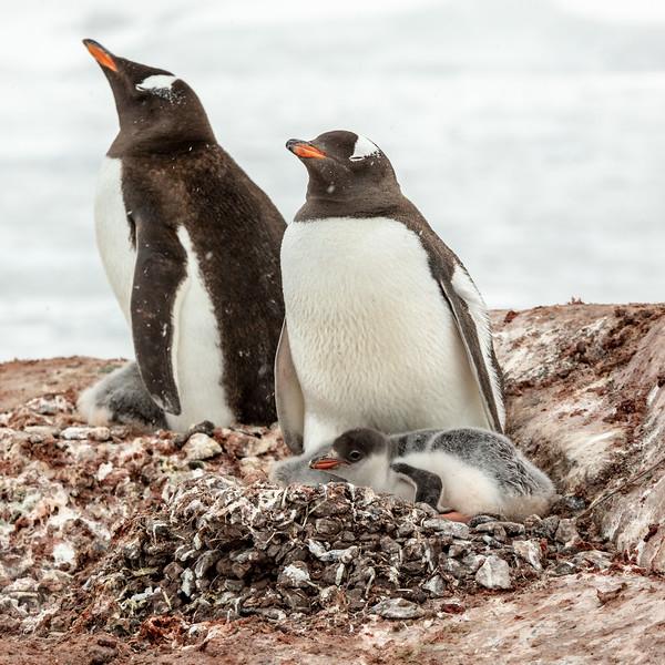 2019_01_Antarktis_04429.jpg