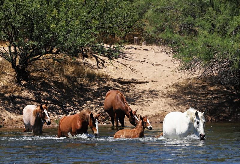 Memorial Day at Salt River Wild Horses Mon May  27 2019 257_pe_pe.jpg