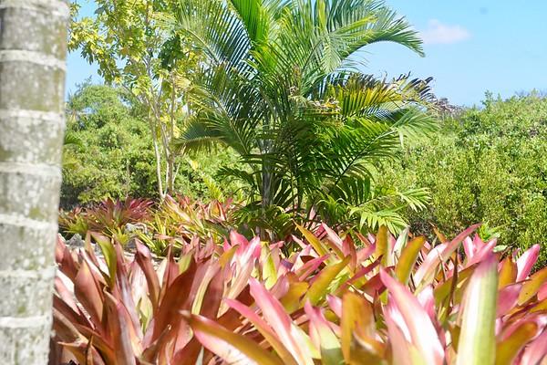 3-Cayman/Trey's Photos of Botanic Park