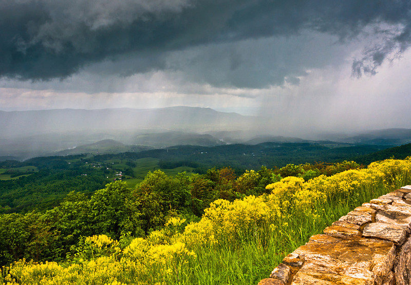 Yellow spring flowers and view of a rainstorm over the Shenandoah Valley, seen from Skyline Drive in Shenandoah National Park, Virginia.