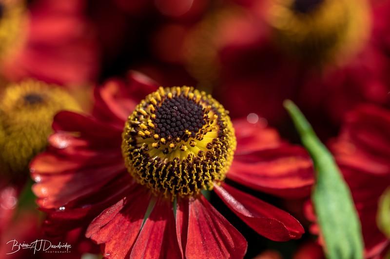 850_Sussex Prairie Gardens-8502815.jpg