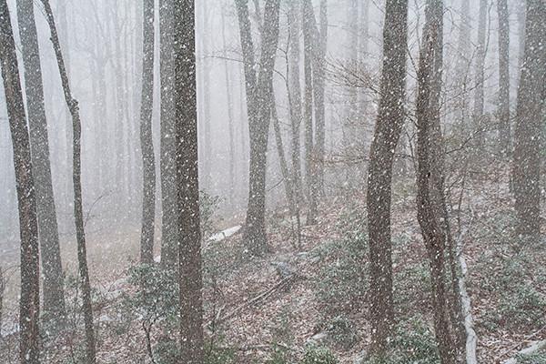 Virginia Woods: Four Seasons