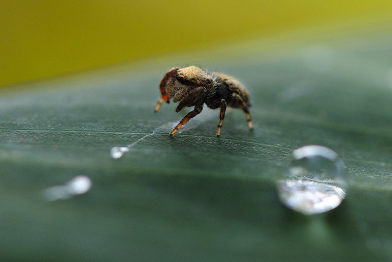 Size doesn't matter, Jumper and a dew drop