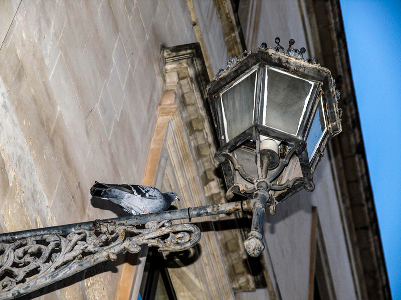 The Pigeon and the Street Lantern...
