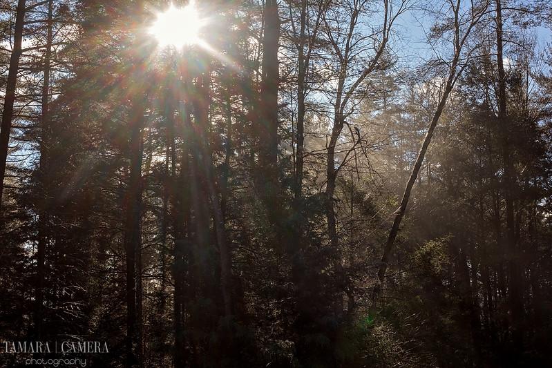 Sunshine Woods-8.jpg
